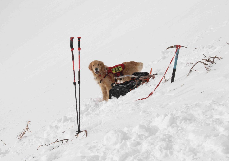 2013 全国雪崩 2月09日(50)