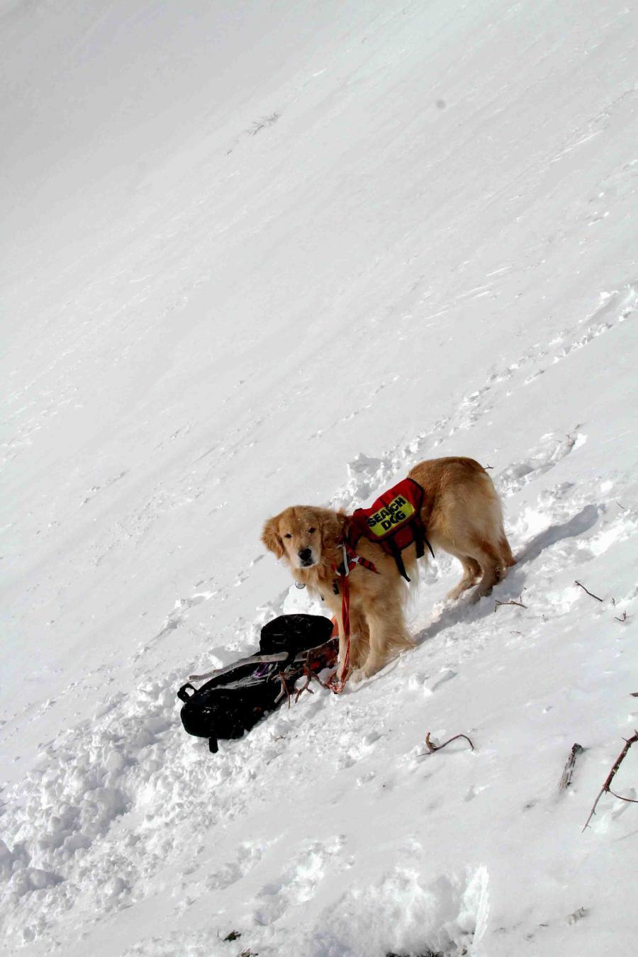 2013 全国雪崩 2月09日(57)