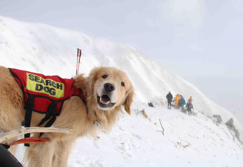 2013 全国雪崩 2月09日(58)