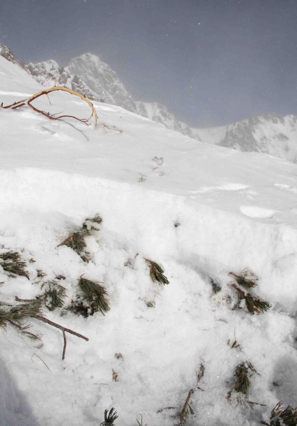 2013 全国雪崩 2月09日(59)