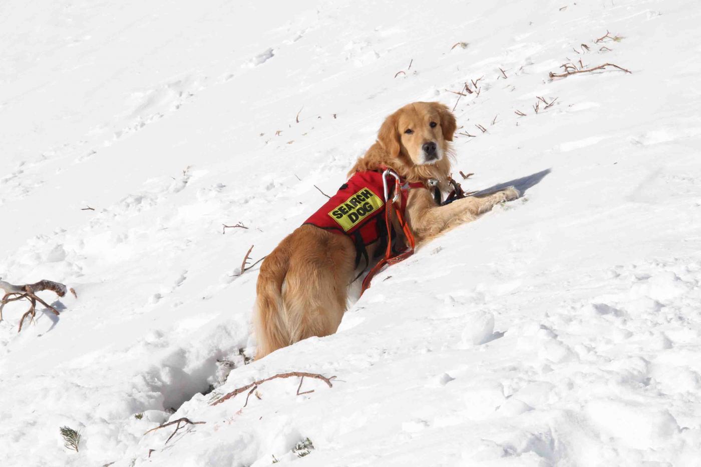 2013 全国雪崩 2月09日(62)