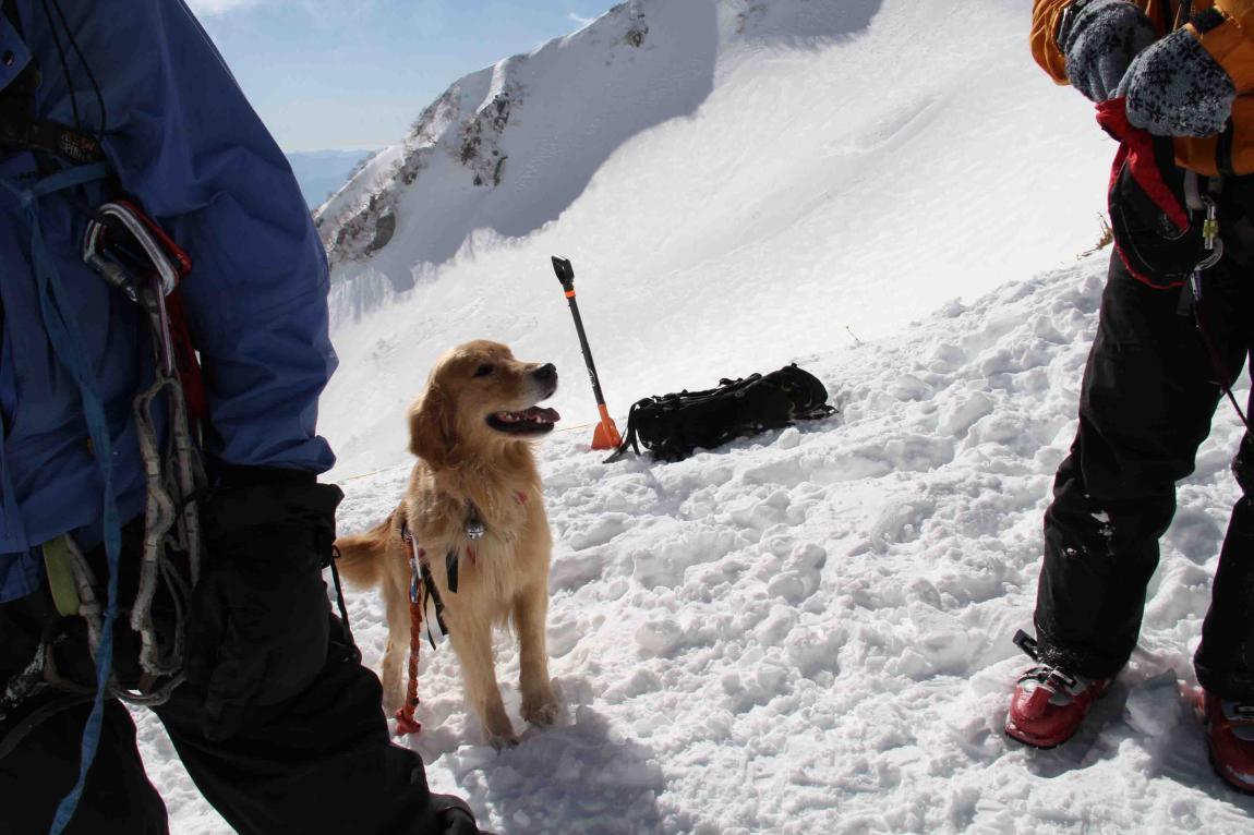 2013 全国雪崩 2月09日(88)