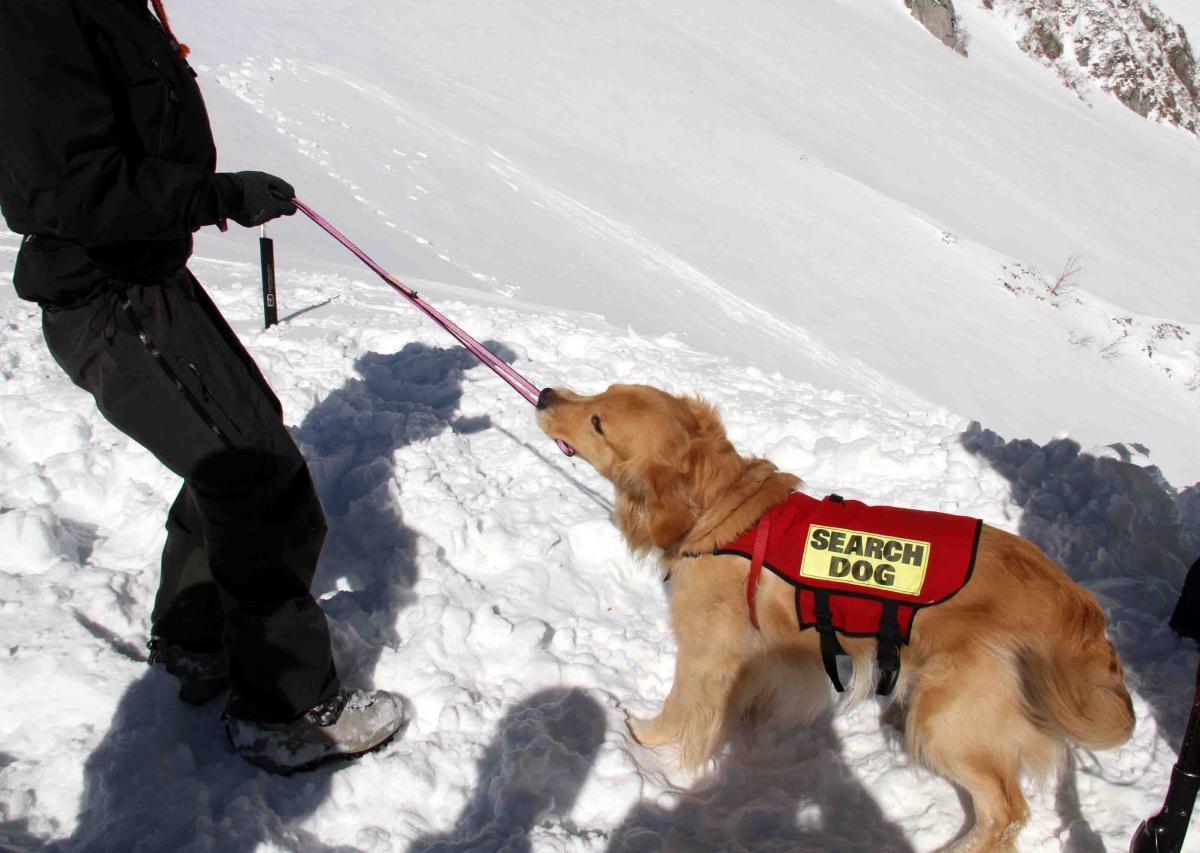 2013 全国雪崩 2月09日(92)
