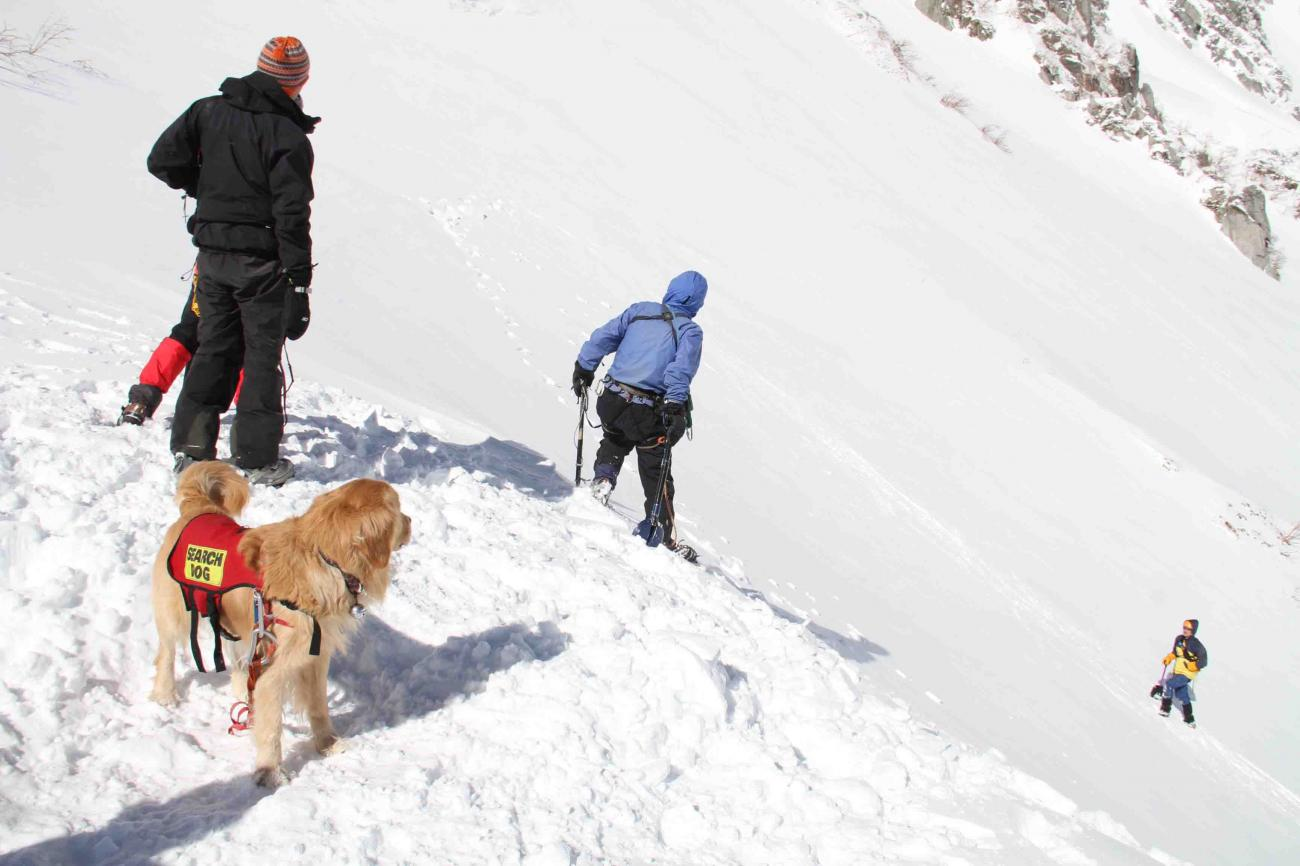 2013 全国雪崩 2月09日(100)