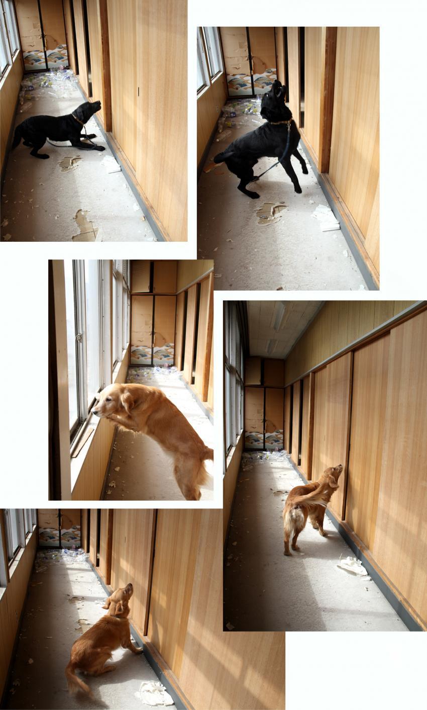 室内捜索訓練 (4)