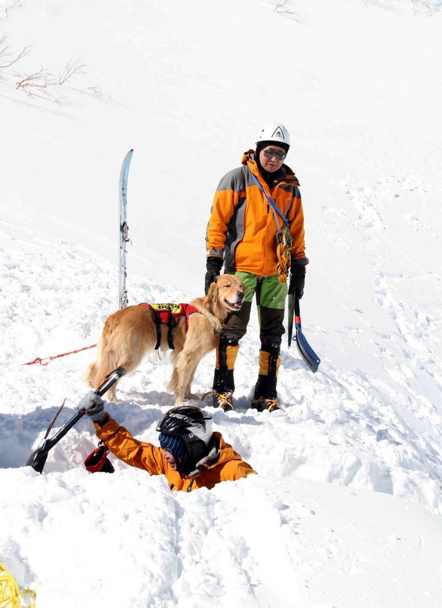 2013 全国雪崩 2月10日(112)