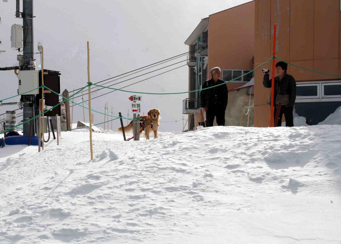2013 全国雪崩 2月10日(132)
