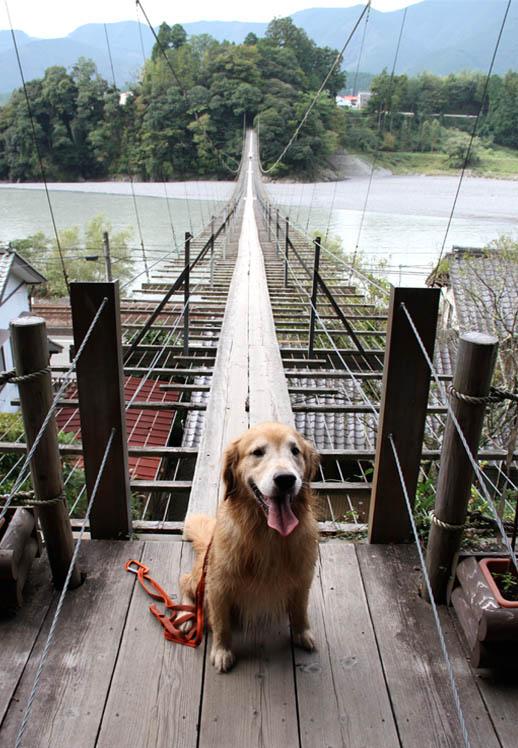 塩郷の吊り橋(3)