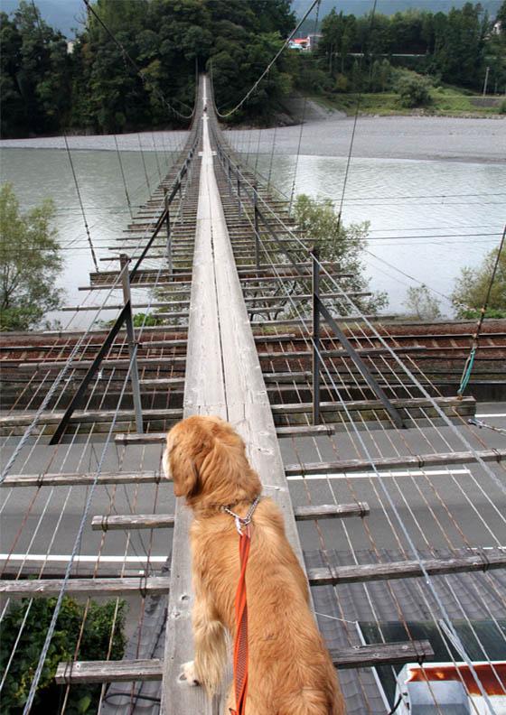 塩郷の吊り橋(7)