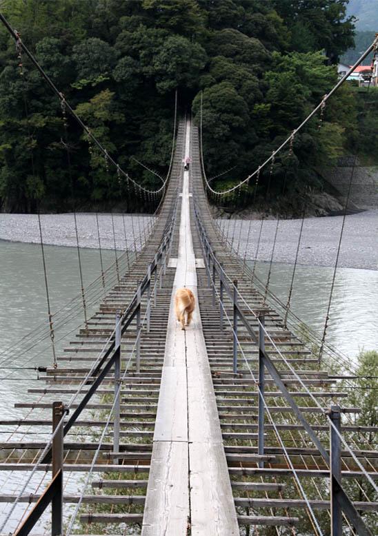 塩郷の吊り橋(8)