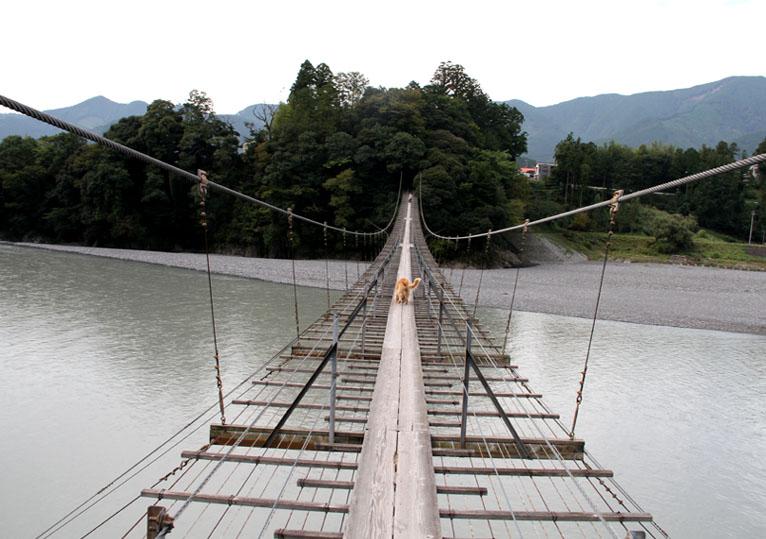 塩郷の吊り橋(9)