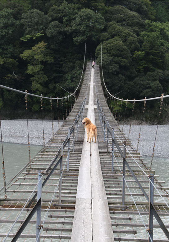 塩郷の吊り橋(10)