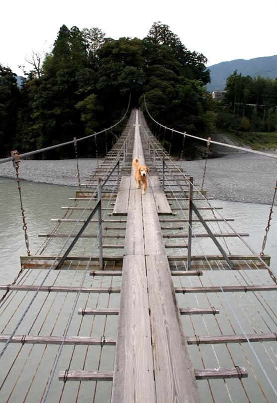 塩郷の吊り橋(11)