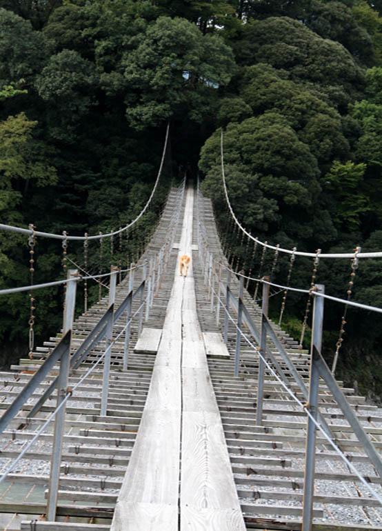 塩郷の吊り橋(12)