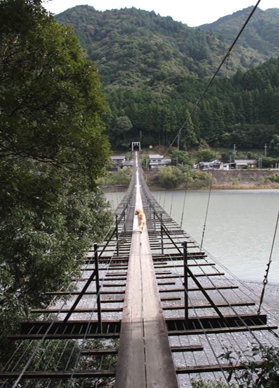 塩郷の吊り橋(18)