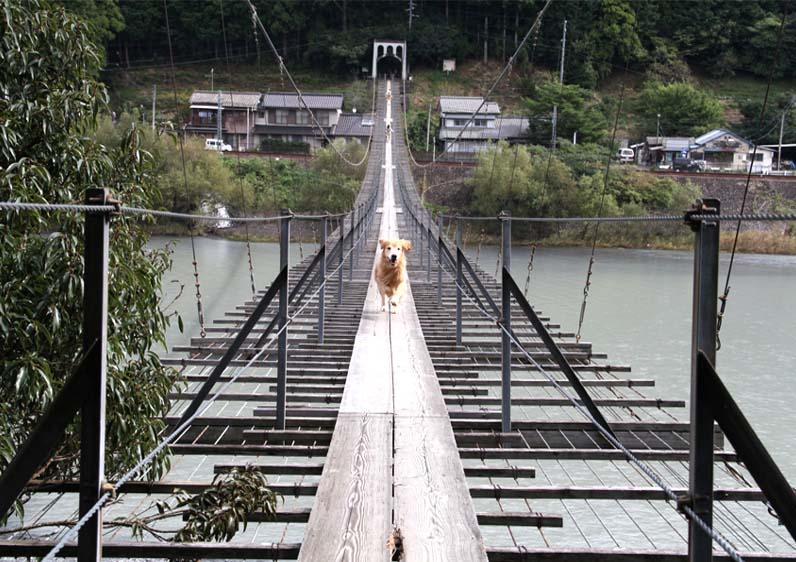 塩郷の吊り橋(19)