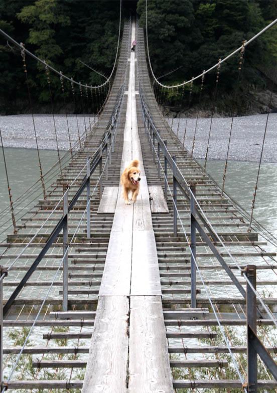 塩郷の吊り橋(20)