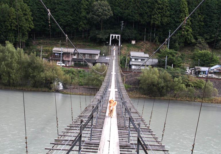 塩郷の吊り橋(21)
