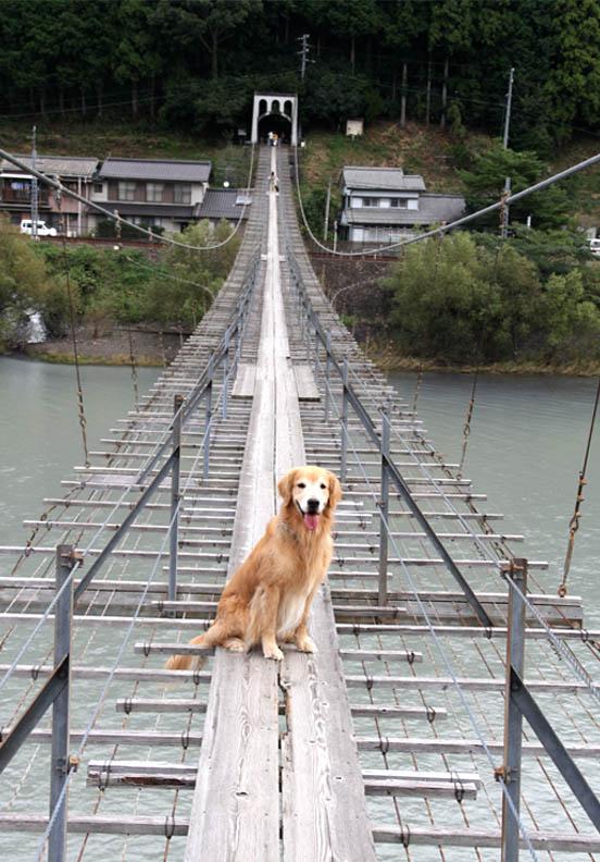 塩郷の吊り橋(23)
