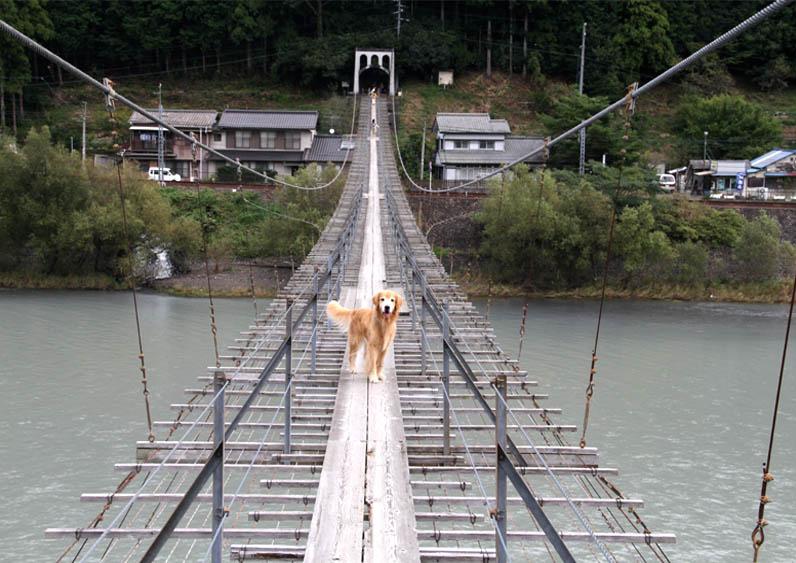 塩郷の吊り橋(22)