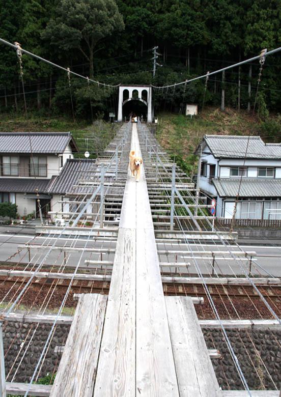 塩郷の吊り橋(24)