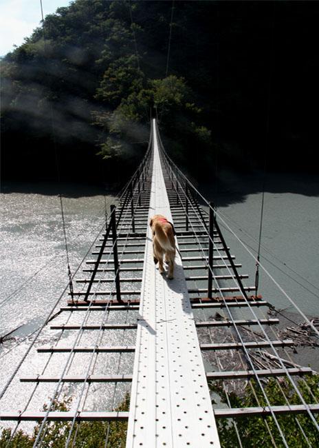 畑薙大吊橋(7)
