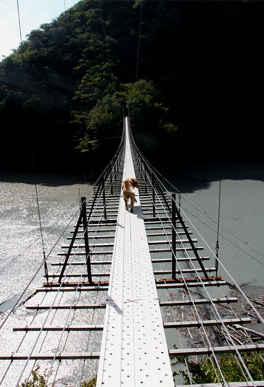 畑薙大吊橋(10)