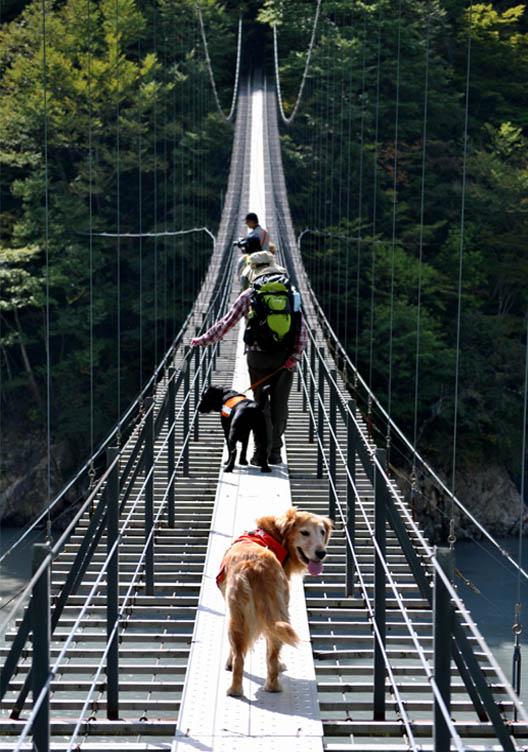 畑薙大吊橋(12)