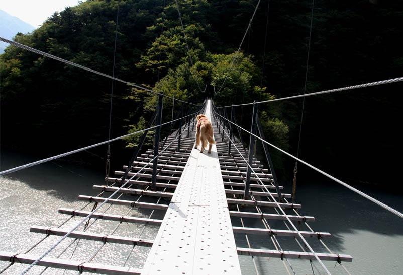 畑薙大吊橋(13)