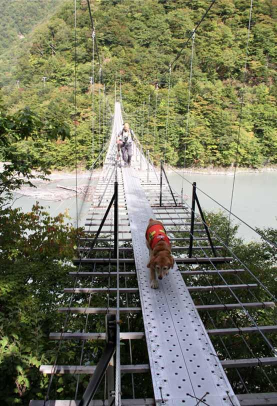 畑薙大吊橋(15)