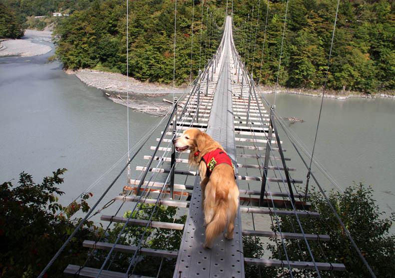 畑薙大吊橋(17)
