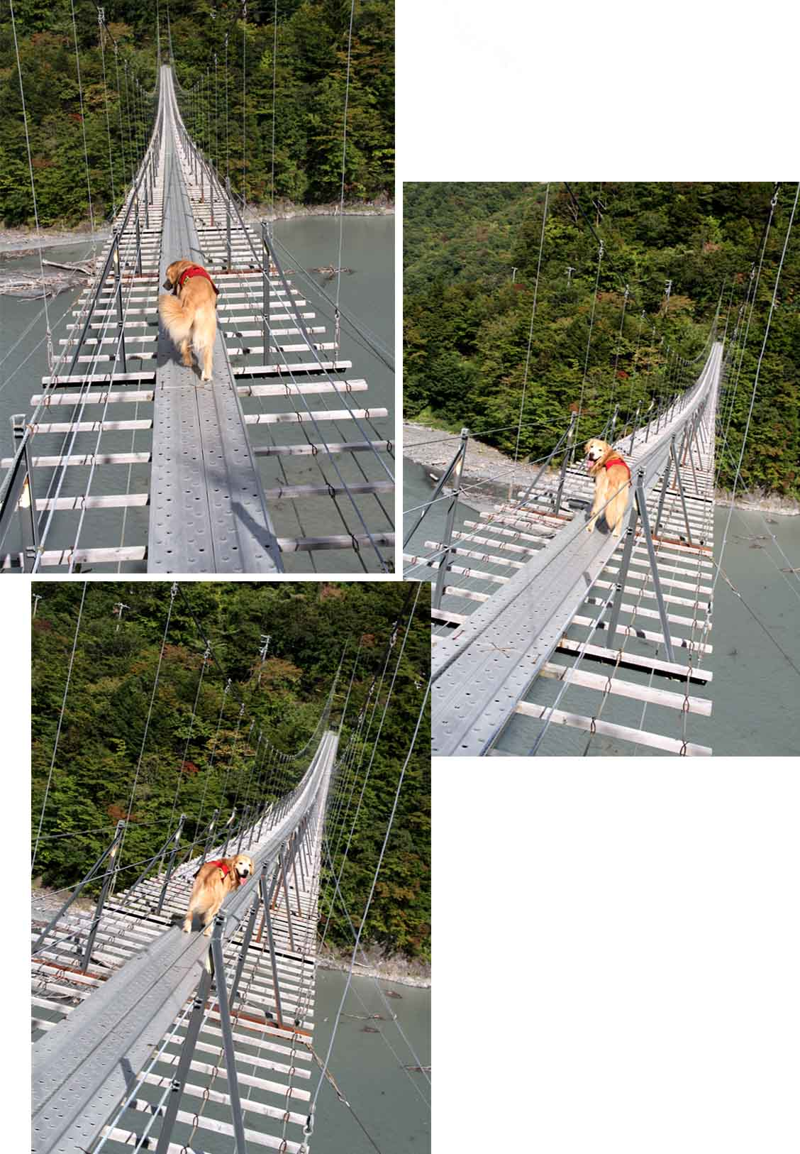 畑薙大吊橋(18)