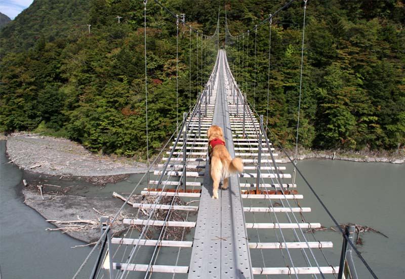 畑薙大吊橋(19)