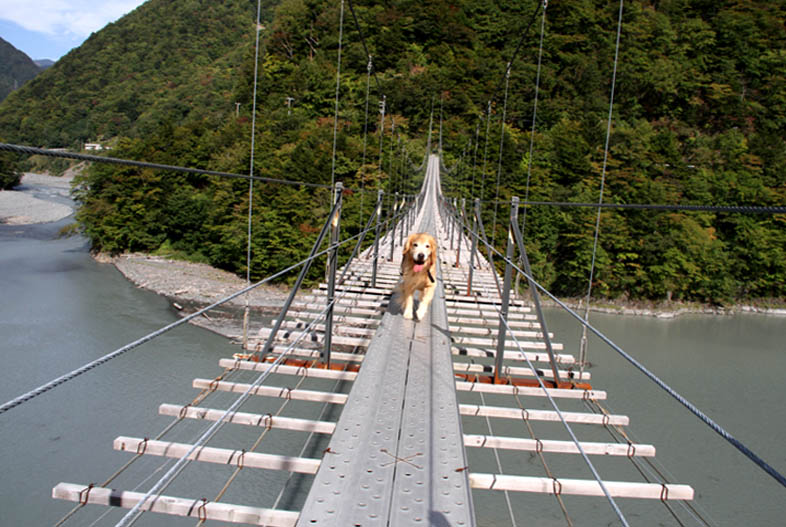 畑薙大吊橋(20)
