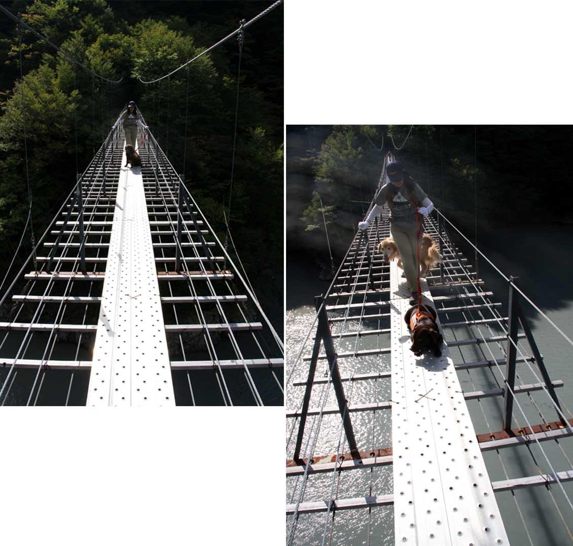畑薙大吊橋(22)