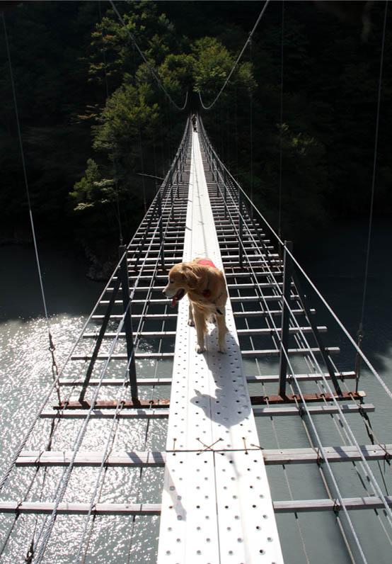 畑薙大吊橋(23)