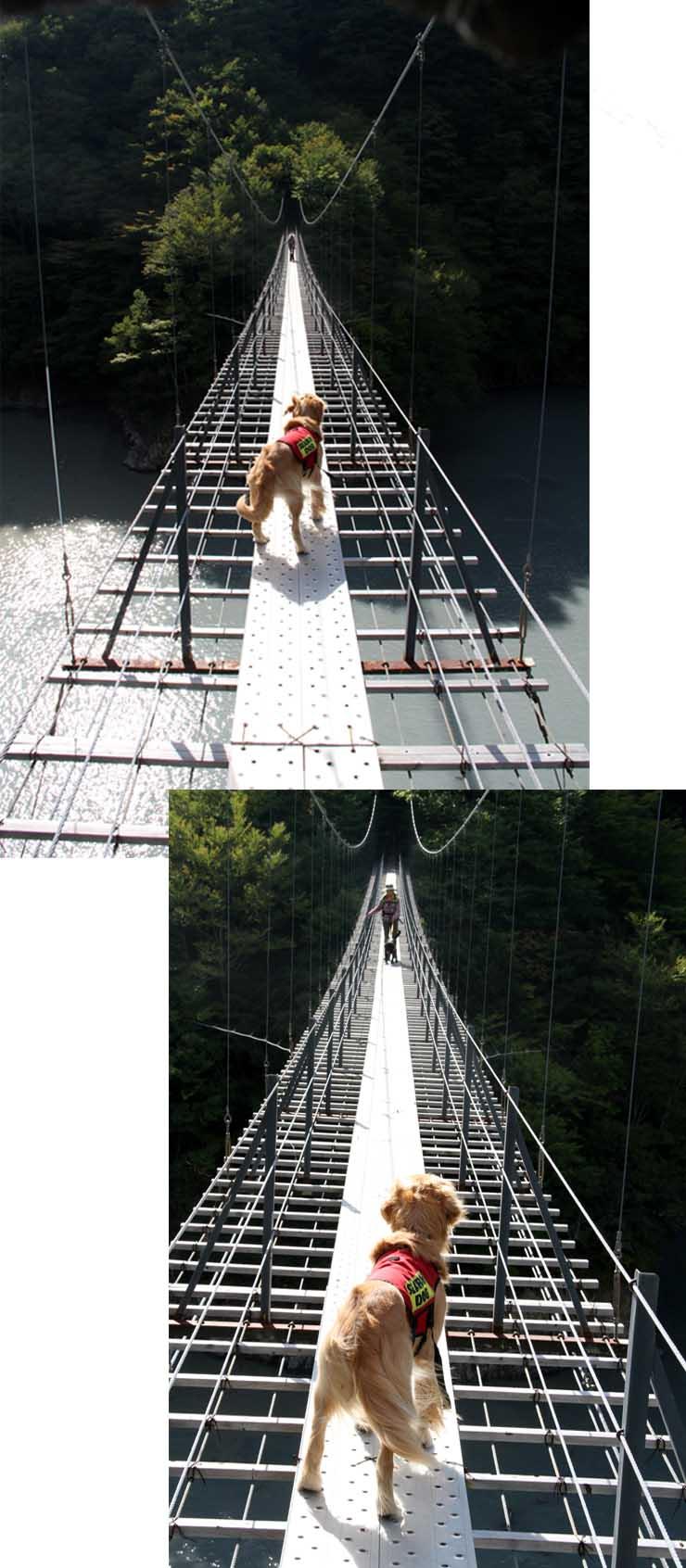 畑薙大吊橋(24)