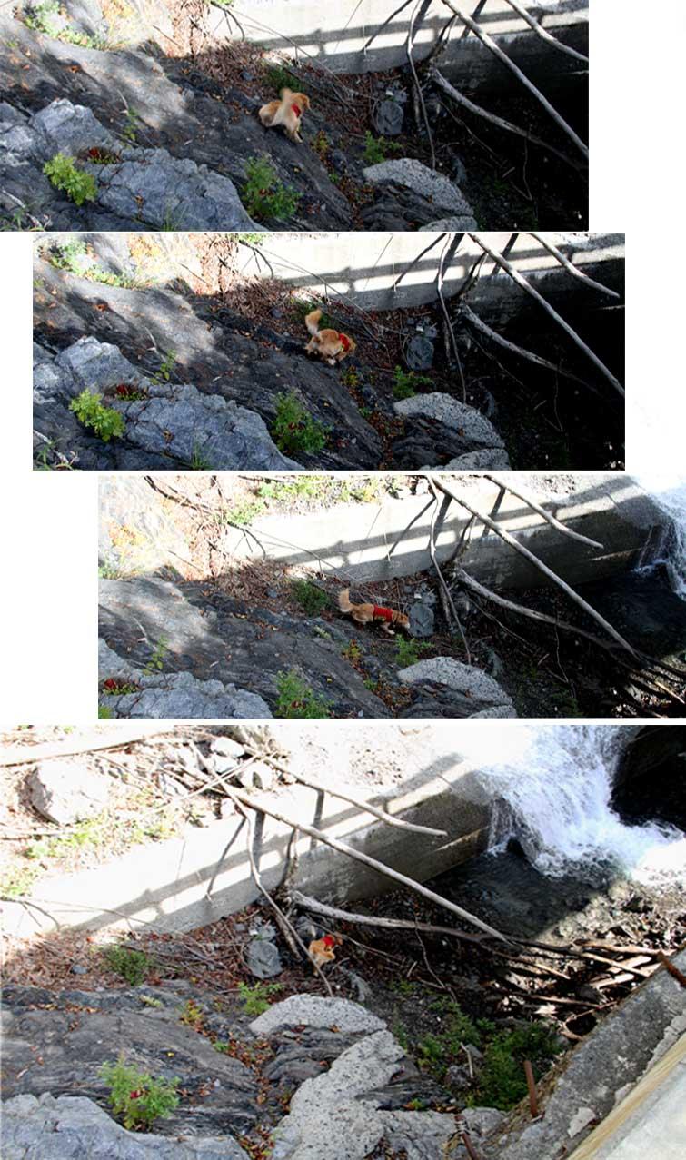 畑薙湖畔蓬沢堰堤で(2)