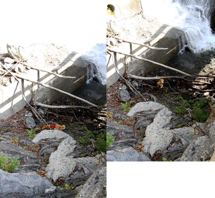 畑薙湖畔蓬沢堰堤で(7)