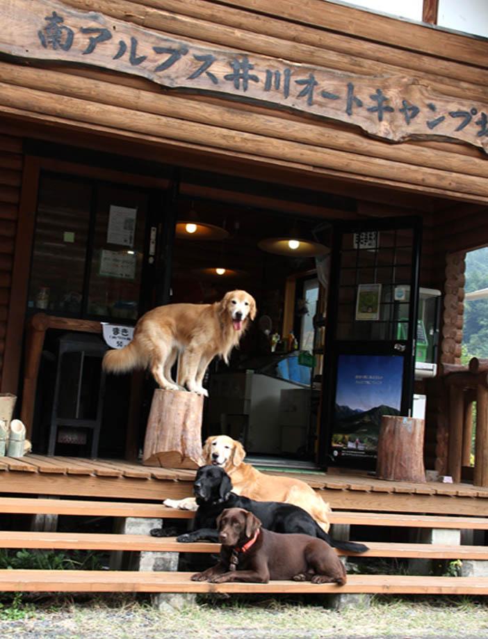 井川キャンプ場にて(7)