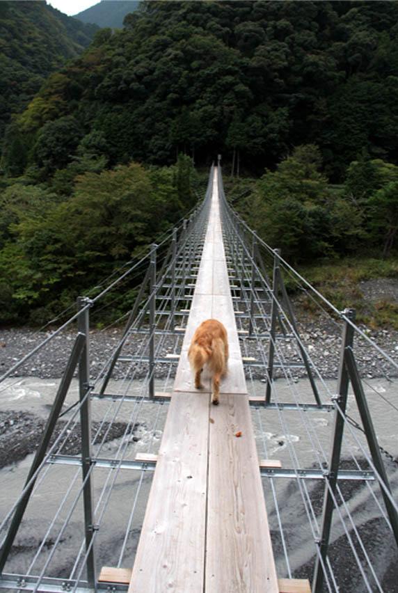 吊り橋ツアー(9)