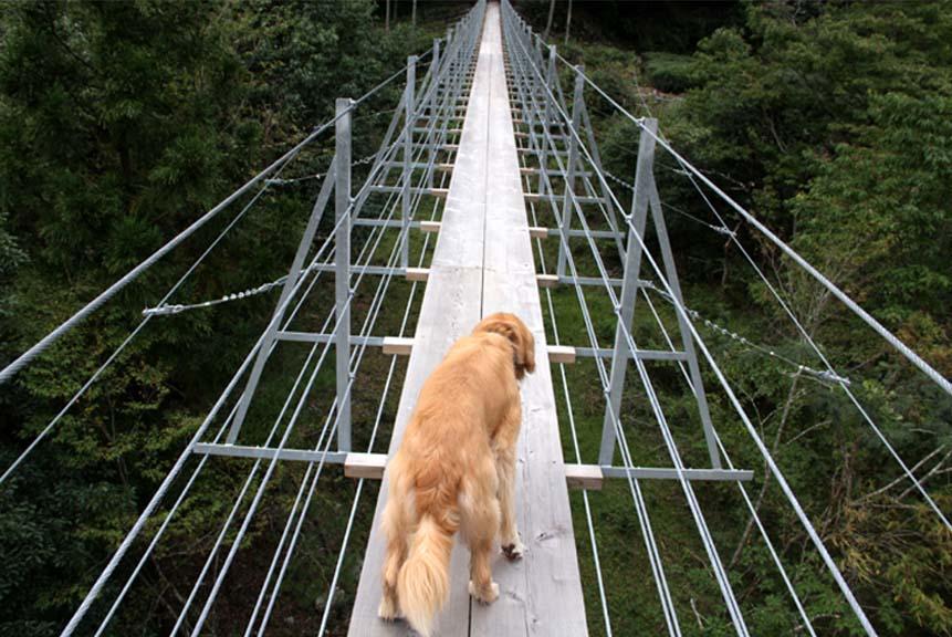 吊り橋ツアー(10)