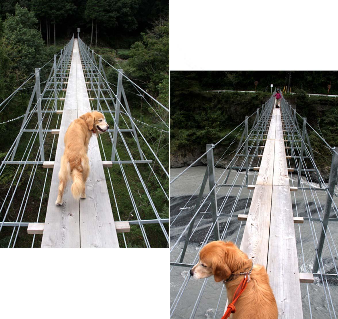 吊り橋ツアー(11)
