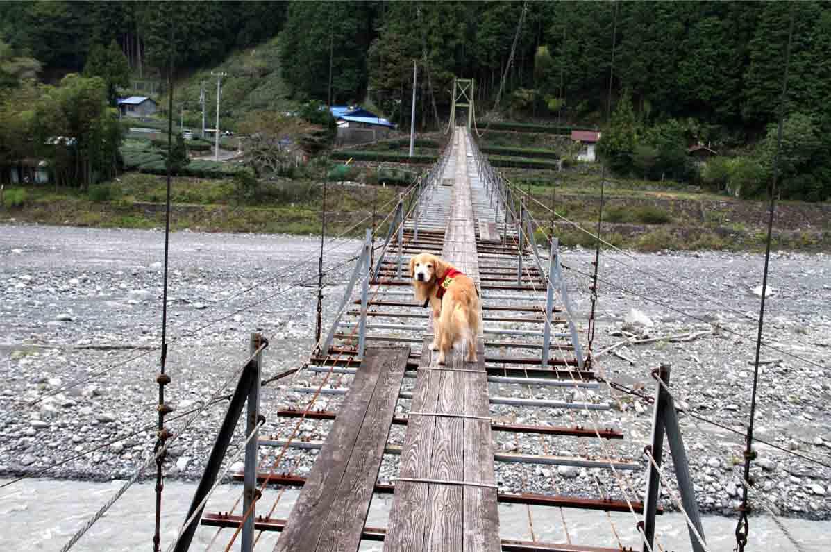 吊り橋ツアー(12)