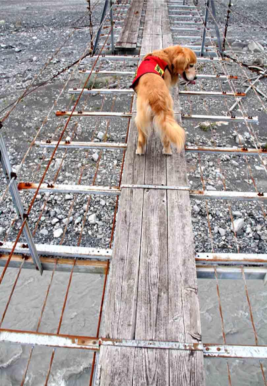 吊り橋ツアー(14)