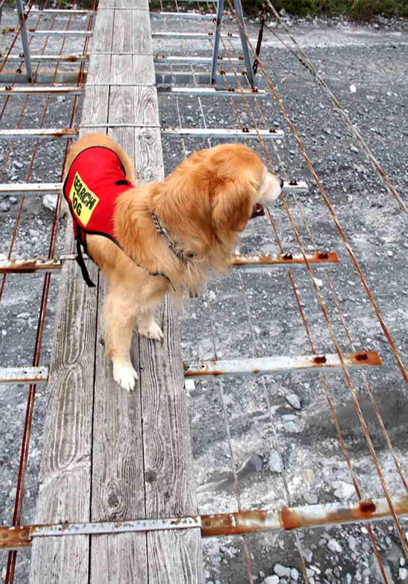 吊り橋ツアー(15)