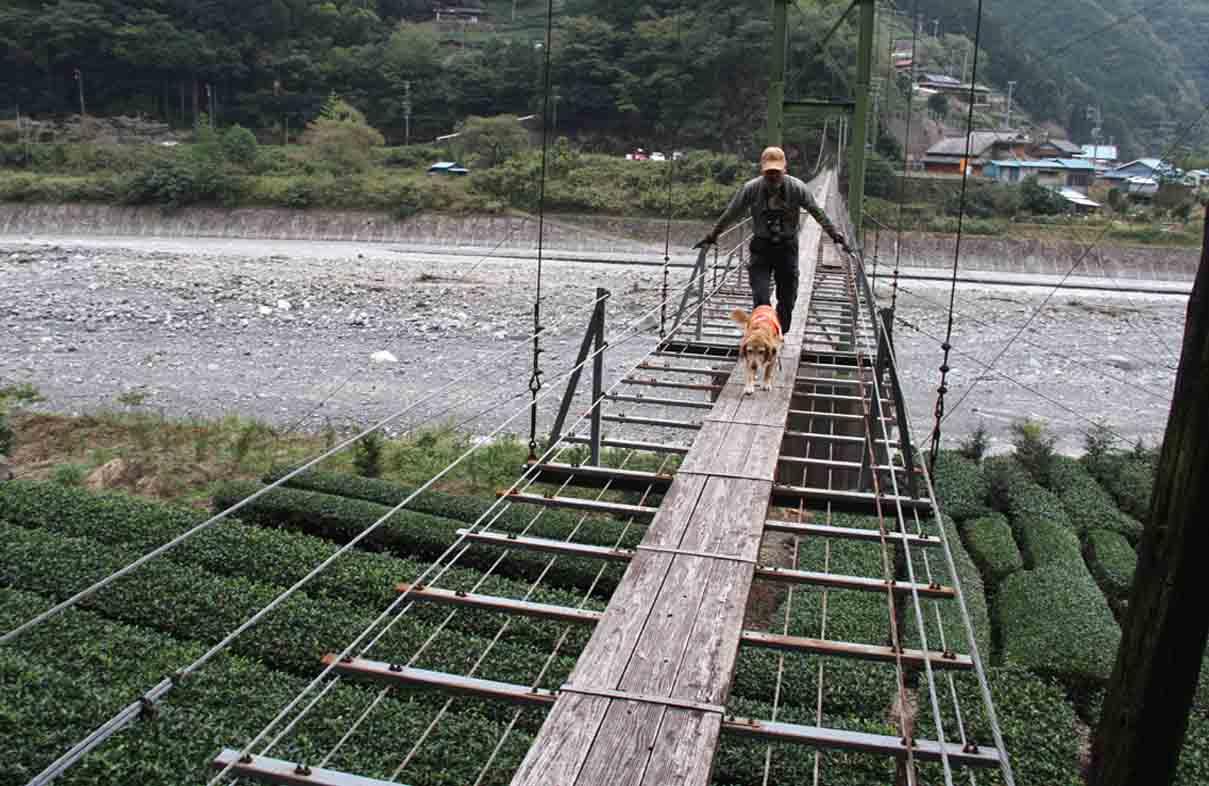 吊り橋ツアー(20)