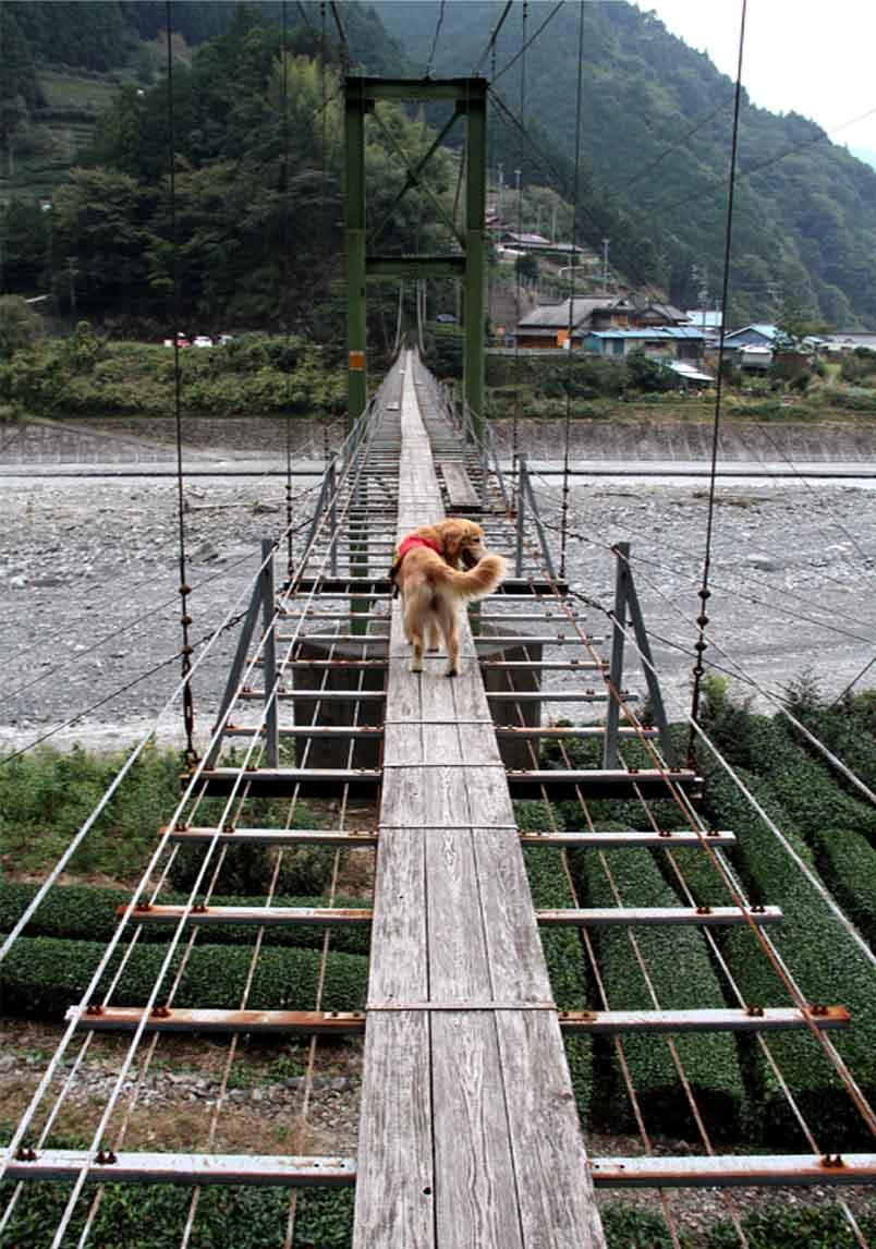 吊り橋ツアー(21)