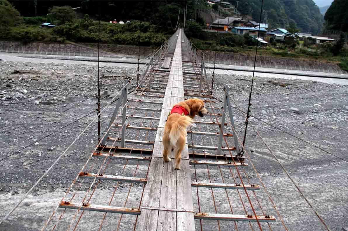 吊り橋ツアー(22)