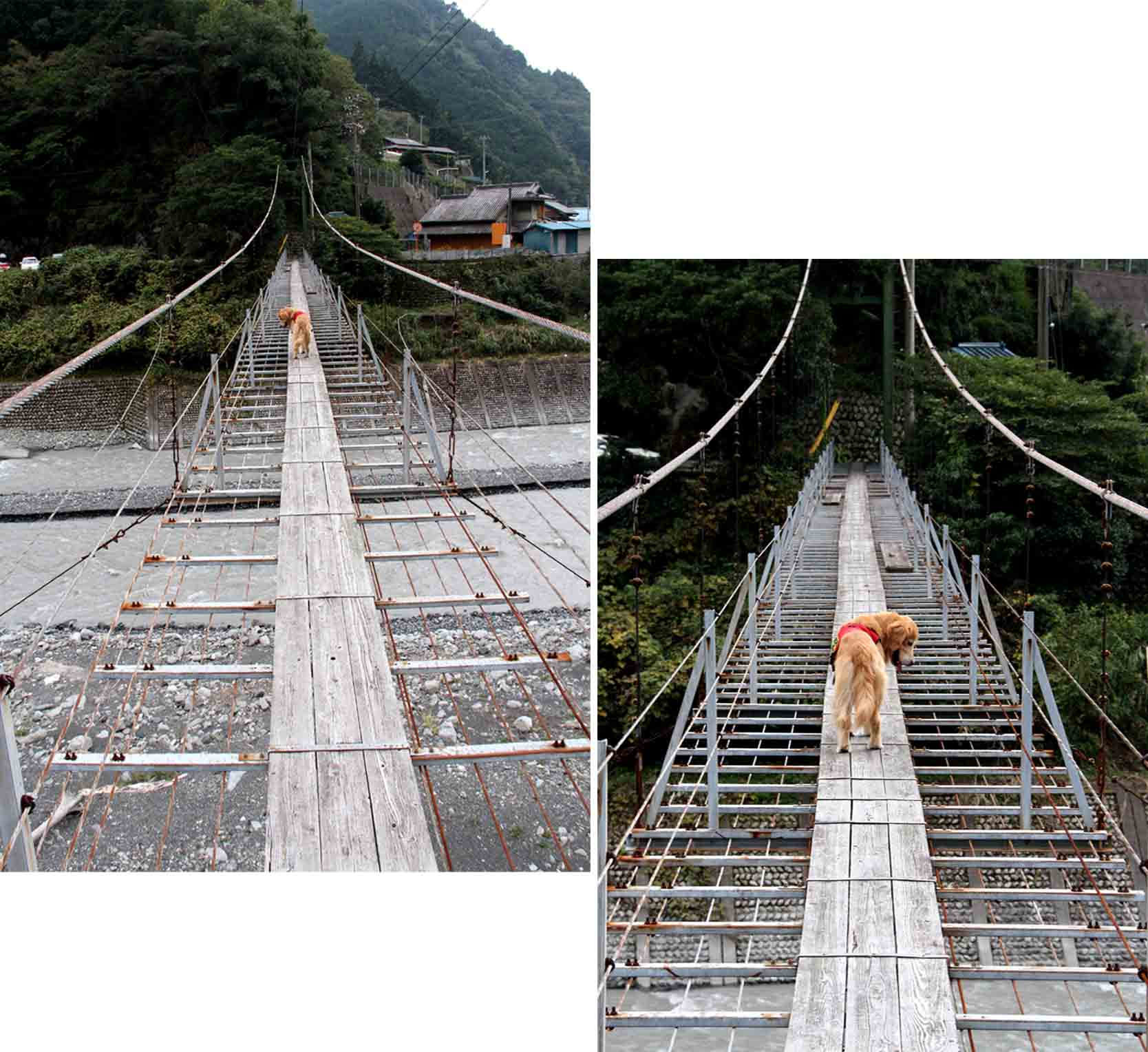 吊り橋ツアー(23)